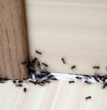 Dimensioni minime bagno come gestire al meglio lo spazio rifare casa - Come eliminare le formiche in casa ...